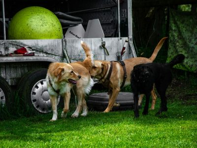 Hundetrainer Hilden Burga Torges