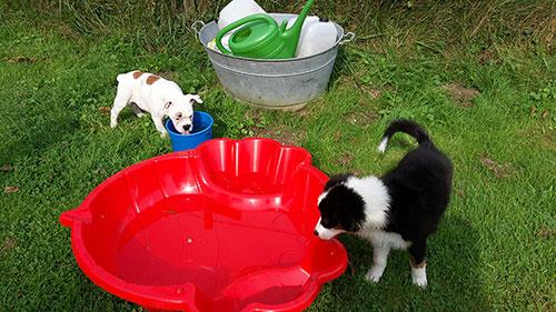Welpenerziehung HundeArt