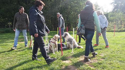 Junghunde Erziehungskurs HundeArt