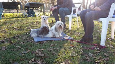 Kleinhundekurs HundeArt