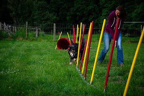 slow agility HundeArt