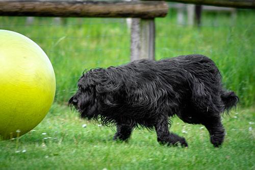 Treibball HundeArt