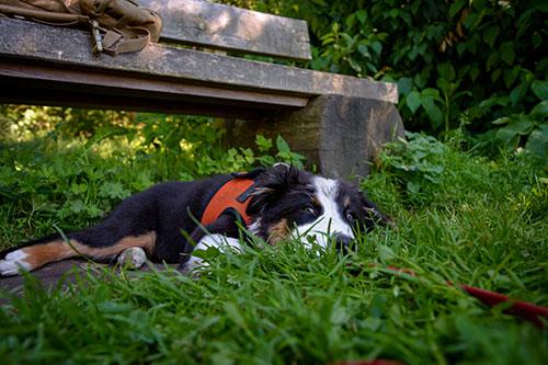 Wanderungen HundeArt