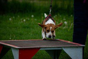 Hundeschule Beschäftigung Agility Winderwandern Treibball