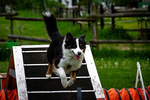 agility HundeArt