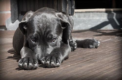 Einzeltraining HundeArt Hilden