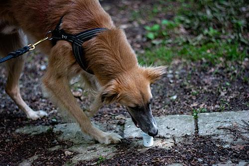 Nasenarbeit HundeArt
