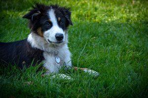 Hundeschule Einzelkurse Welpen Junghunde verhaltensauffällige Hunde