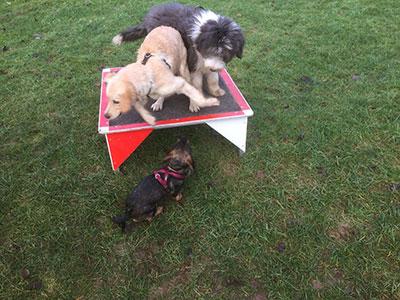 Welpenspiel HundeArt